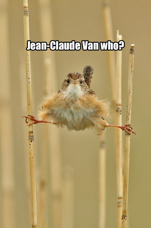 Jean-Claude Van who?