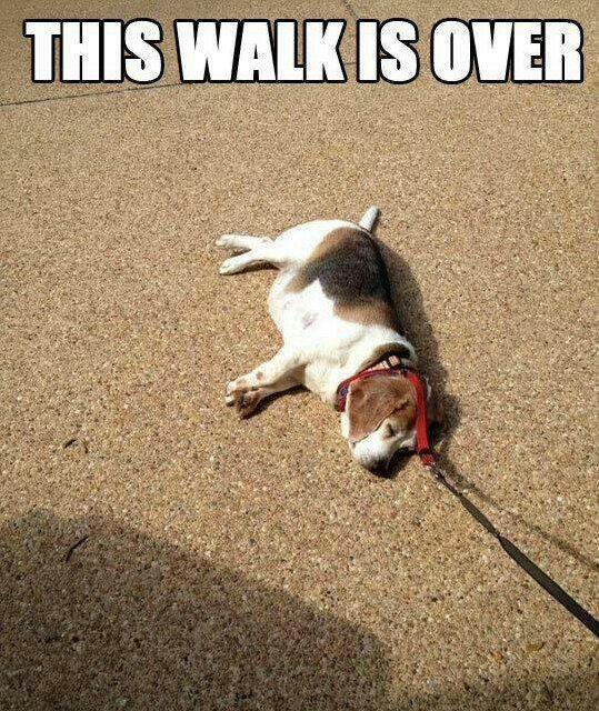 walk is over